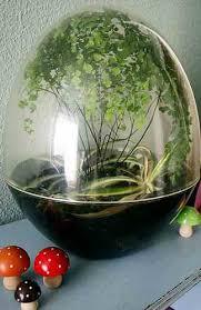 bring the garden inside with a terrarium