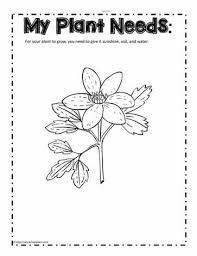 plant needs worksheet worksheets