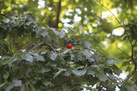 backyard bird blog