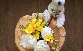 dog flower arrangement maltese dog flower arrangement gardening flower and vegetables