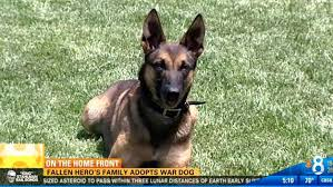 belgian shepherd el paso couple adopts camp pendleton dog that was with their son when he