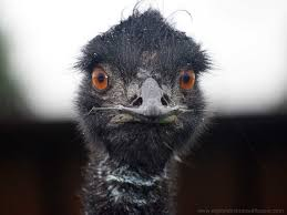 Ostrich Meme - explore ostrich today s homepage