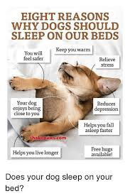 Dog In Bed Meme - eight reasons why dogs should sleep on our beds keep you warm you
