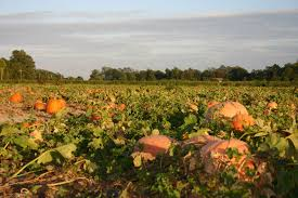 Best Pumpkin Patch Snohomish County by Mr Pepper U0027s Pumpkin Patch Offers A Fun Family Experience Enjoy