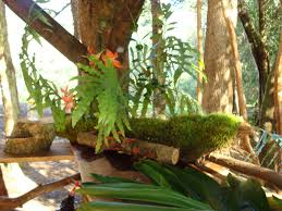 hawaiian home decorations get inspired with home design and