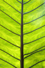 nice free green palm leaf texture image www myfreetextures com