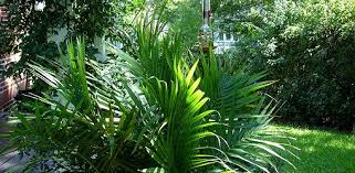 Summer Garden Plants - how to spruce up a summer garden with tropical plants today u0027s