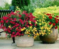 flower garden gardening tips gardening ideas