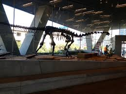 perot museum of nature and science to open early d magazine