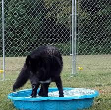 belgian sheepdog rescue trust facebook dreamcatcher wolf sanctuary and rescue home facebook