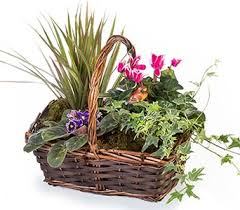 Plant Delivery Send Green Plants In Fort Worth Tx Tcu Florist Ft Worth Plant