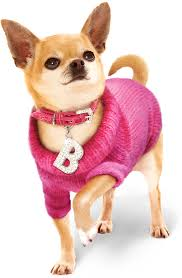 thanksgiving dog sweater fashion week 2015 dog fashion trends for hip pets