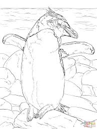 erect crested penguin coloring page free printable coloring pages