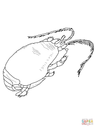 halloween crab halloween crab coloring page free printable coloring pages