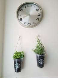 grow your own diy hanging starbucks cup herb garden space plate
