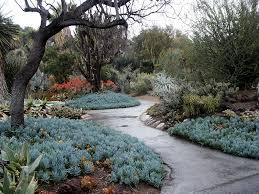 Huntington Botanical Garden by Blue Stick Succulents Huntington Library Desert Garden 085
