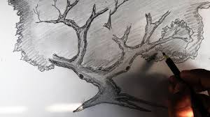 how to draw a tree and branches scenery pencil drawing youtube