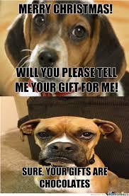 Grumpy Dog Meme - grumpy dog wants other dogs die by cribi meme center