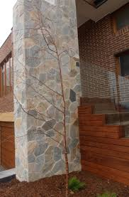coolum native nursery trees and shrubs to 6 metres 11 best external cladding images on pinterest external cladding