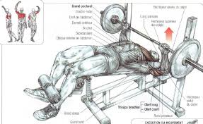 decline bench press muscles decline bench press the stephane andre