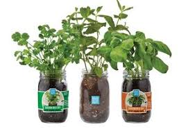 Indoor Gardening Kits U2013 Back To The Roots Official Site