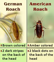 roaches in my bathroom how to get rid of cockroaches fast naturally kill cockroaches