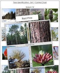 montessori tree printable tree identification cards set 1 printable montessori botany