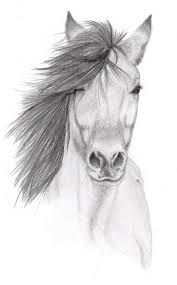 beautiful pencil sketches of horses horse pencil sketches