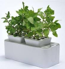 self watering indoor planters zerosoil mini indoor garden self watering planter and indoor