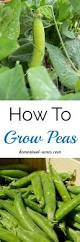 25 best how to grow ideas on pinterest gardening container