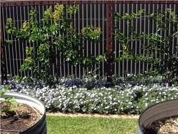 Climbing Plants On Trellis Garden Trellises For Climbing Plants U2014 Optimizing Home Decor Ideas