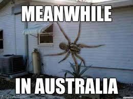 Huge Spider Memes Image Memes - meanwhile in australia spider memes spidermeme funny stuff