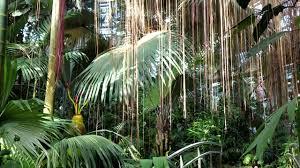 Atlanta Botanical Gardens by Rain Forest In The Fuqua Conservatory At The Atlanta Botanical