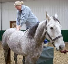 Chiropractor Duties Veterinary Chiropractic Wikipedia