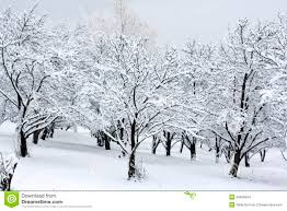 snow covered trees stock images image 35600944