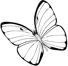 awesome printable butterfly coloring pages 15 on line drawings