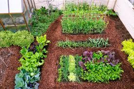 Ideal Vegetable Garden Layout Plant A Cool Season Vegetable Garden Sunset Magazine