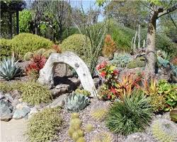 succulents garden ideas beautiful succulent garden succulent rock