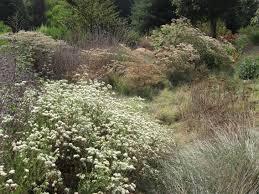los angeles native plants the wild garden a california native habitat dirtgarden