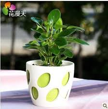 small potted plants amazon com fragrant flowers bumper desk office small potted plants