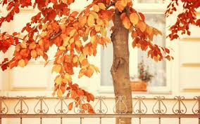 dry leaves autumn wallpapers 43 dry leaves autumn gallery