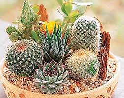 organic succulents etsy