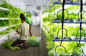 hydroponic farm inhabitat green design innovation