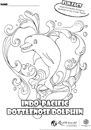 indo pacific bottlenose dolphin archives marine life park blog