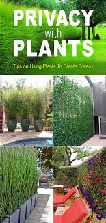 Privacy Garden Ideas Privacy With Plants Yards Plants And Gardens