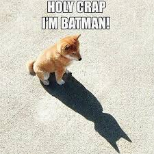Cat And Dog Memes - holy crap i m batman batman know your meme