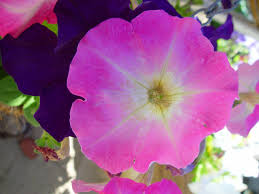 images with purpley pink color c040c0