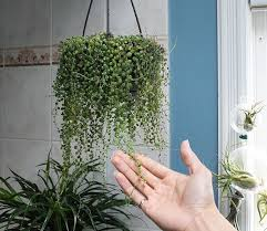 how to id some plants with google u2014 house plant journal