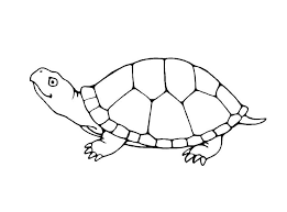 turtle coloring pages funycoloring