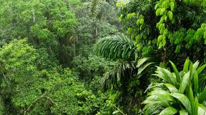 Plants That Grow In Tropical Rainforests Amazon Rainforest Ability To Soak Up Carbon Dioxide Is Falling